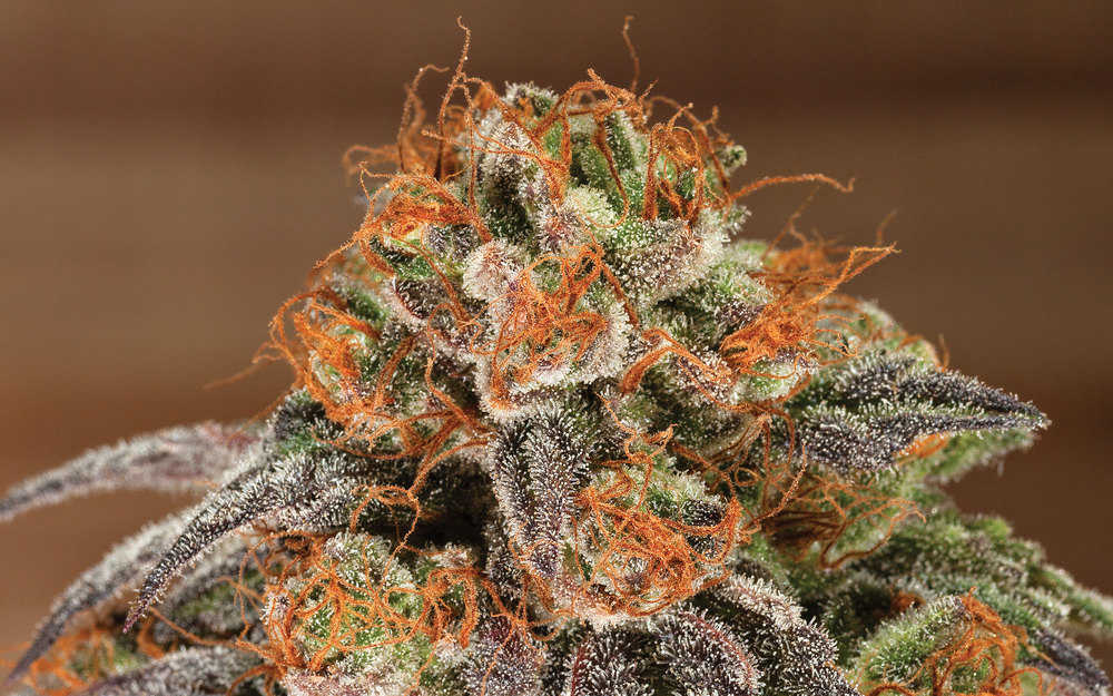 The Strongest Weed Strains on Earth