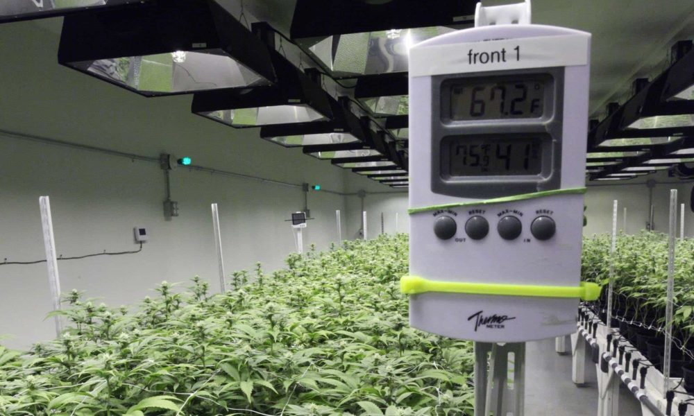 best grow room temperature