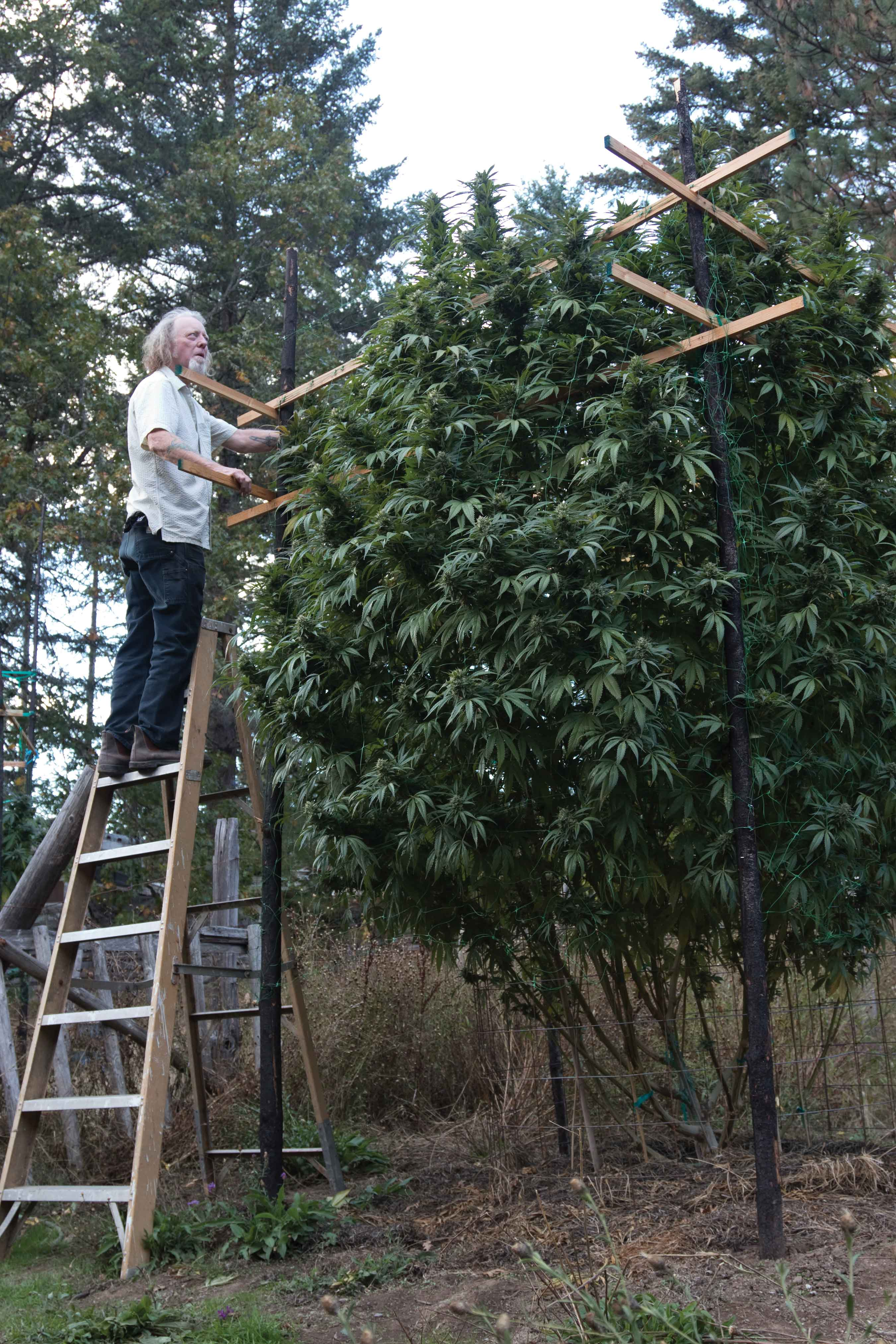 Giant Plants of Southern Oregon • High Times