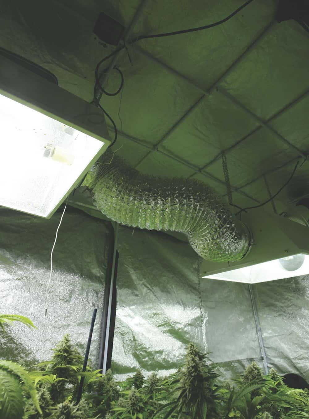 The Ins and Outs of Growing Cannabis at Home