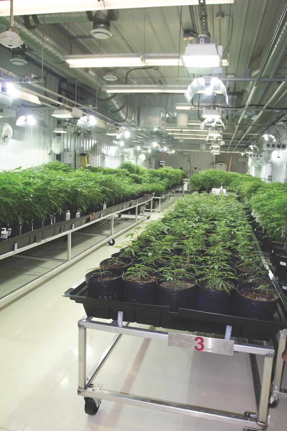 Inside Aurora Cannabis: The World's Biggest Grow